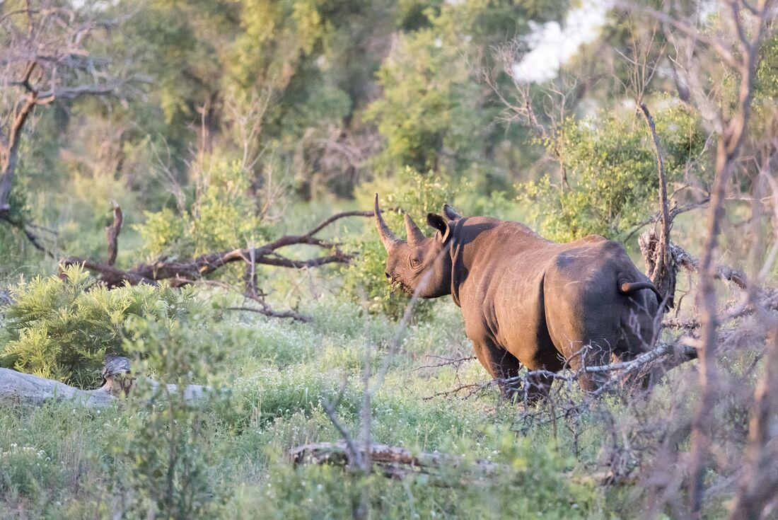 Kruger Experience - Lodge (5 days) 4