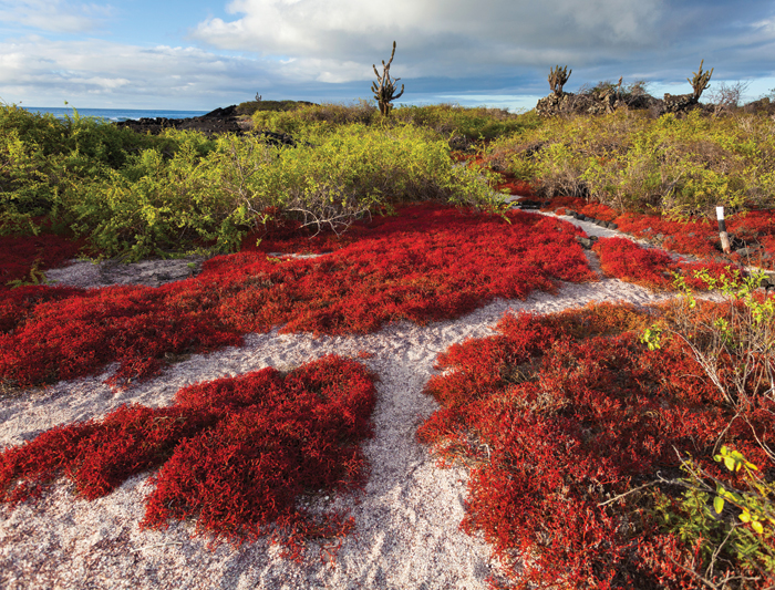 Galapagos Explorer: Central Islands (Grand Queen Beatriz) 3