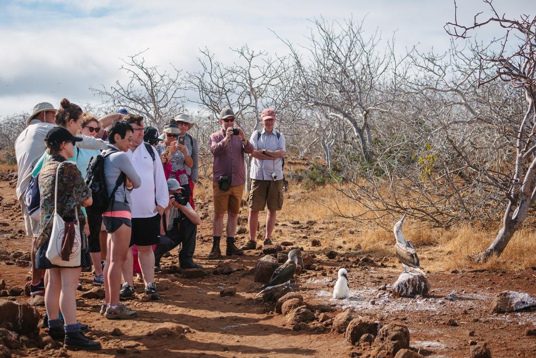 Galapagos Explorer: Central Islands (Grand Queen Beatriz) 2