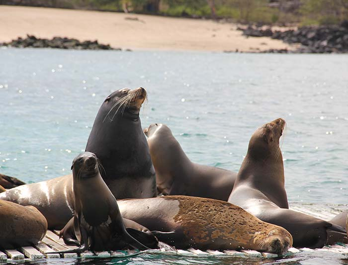 Galapagos Explorer: Southern Islands (Grand Queen Beatriz)