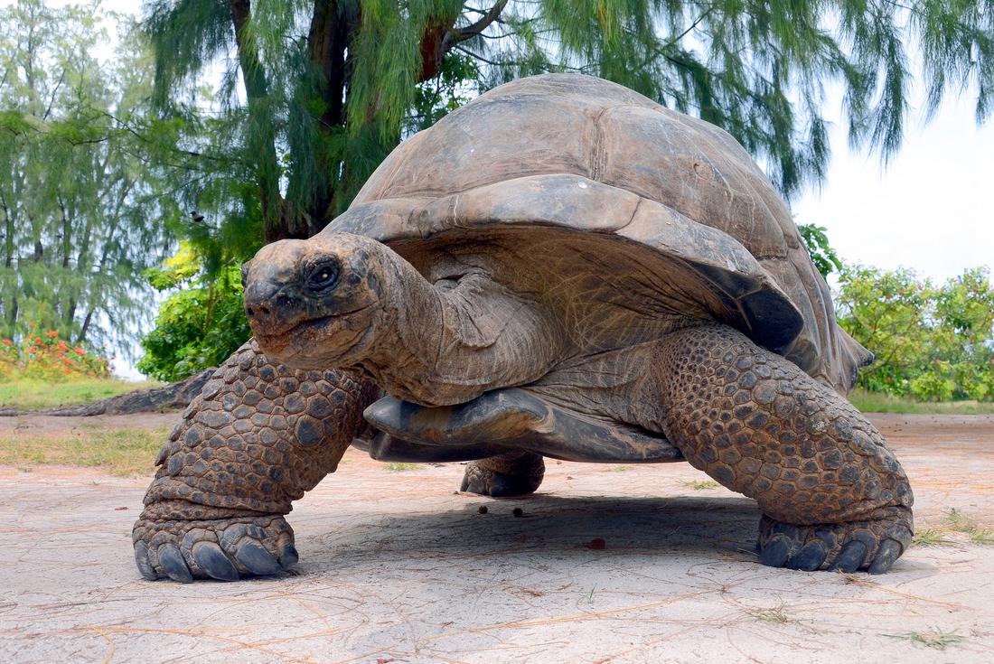 Galapagos Encounter: Southern Islands (Grand Queen Beatriz) 2