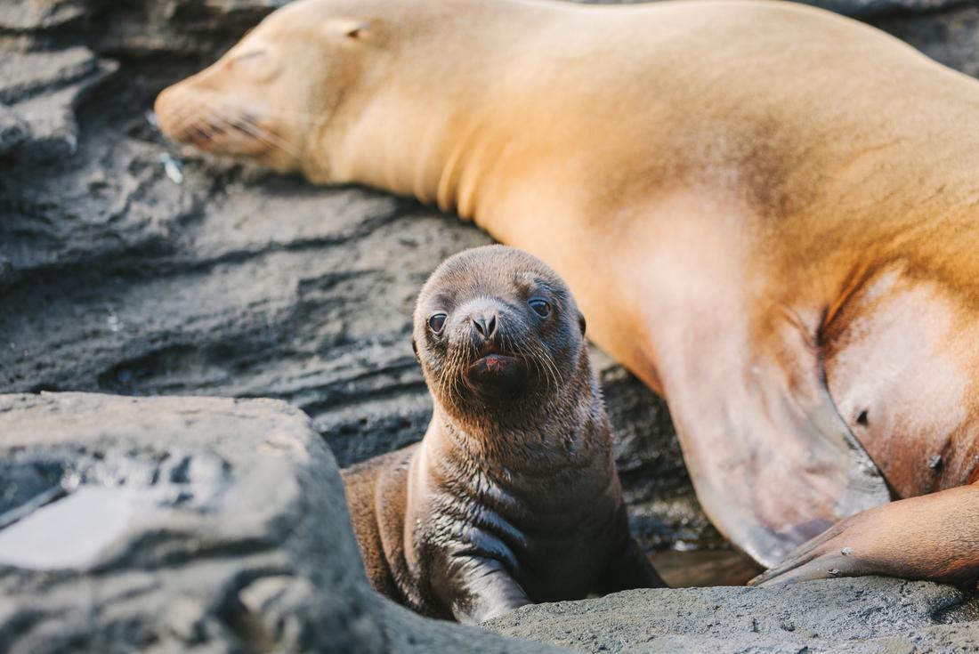 Galapagos Encounter: Southern Islands (Grand Queen Beatriz) 4