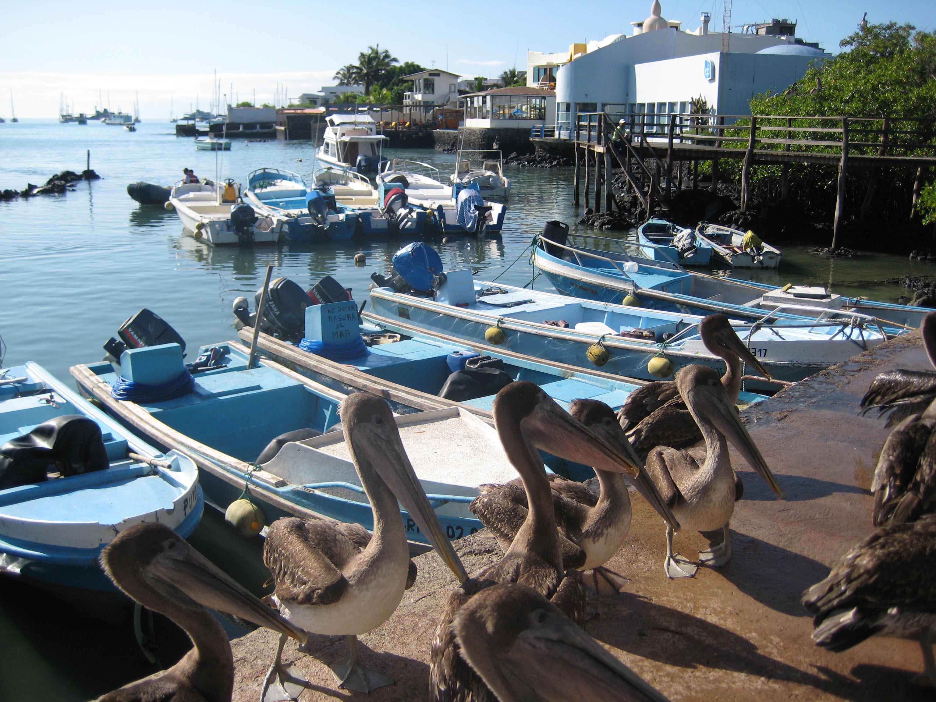 Treasures of Galapagos: Western & Central Islands (Grand Queen Beatriz) 2