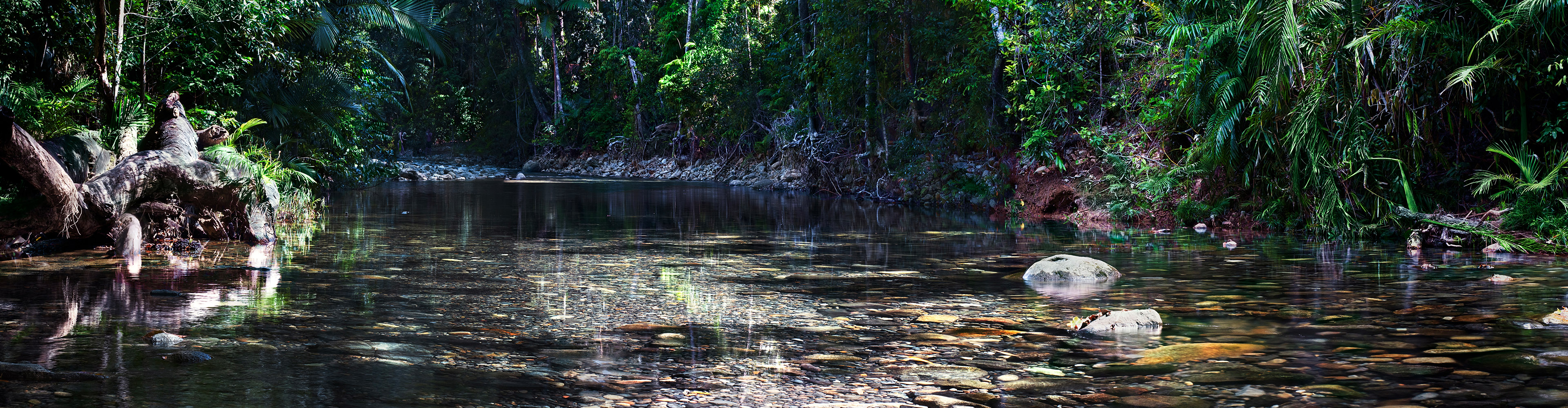 Brisbane to the Daintree Discovery