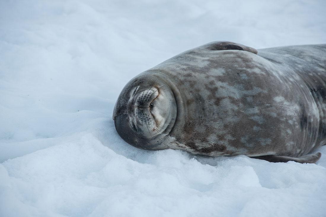 Antarctic Eclipse 3