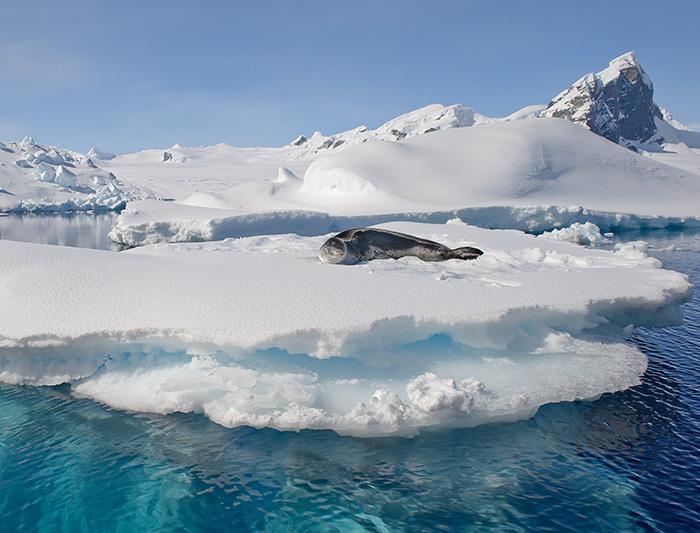 South Georgia & Antarctic Peninsula from Buenos Aires 2
