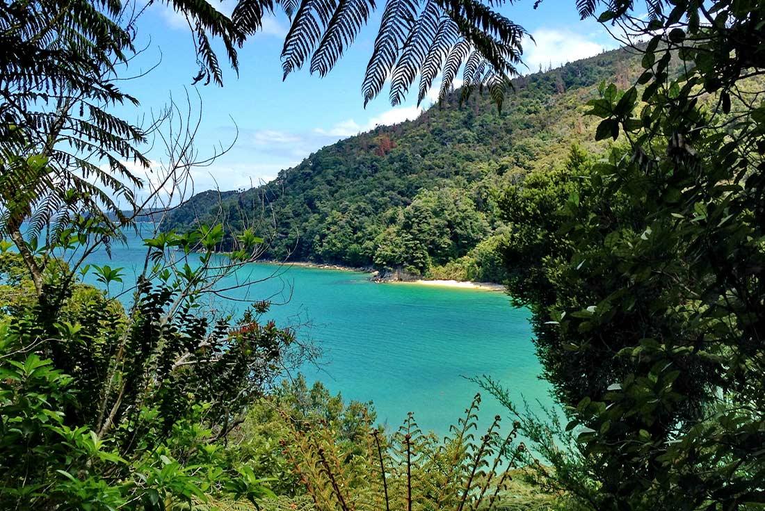 Hike Abel Tasman & West Coasts Rainforests 2