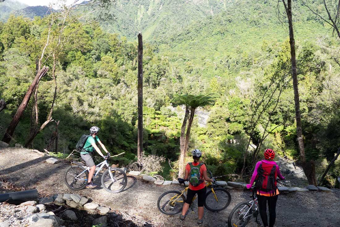Hike Abel Tasman & West Coasts Rainforests 4