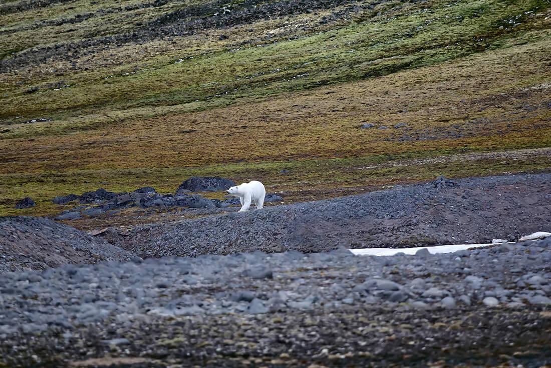 Jewels of the Russian Arctic: Franz Josef Land and Novaya Zemlya 4