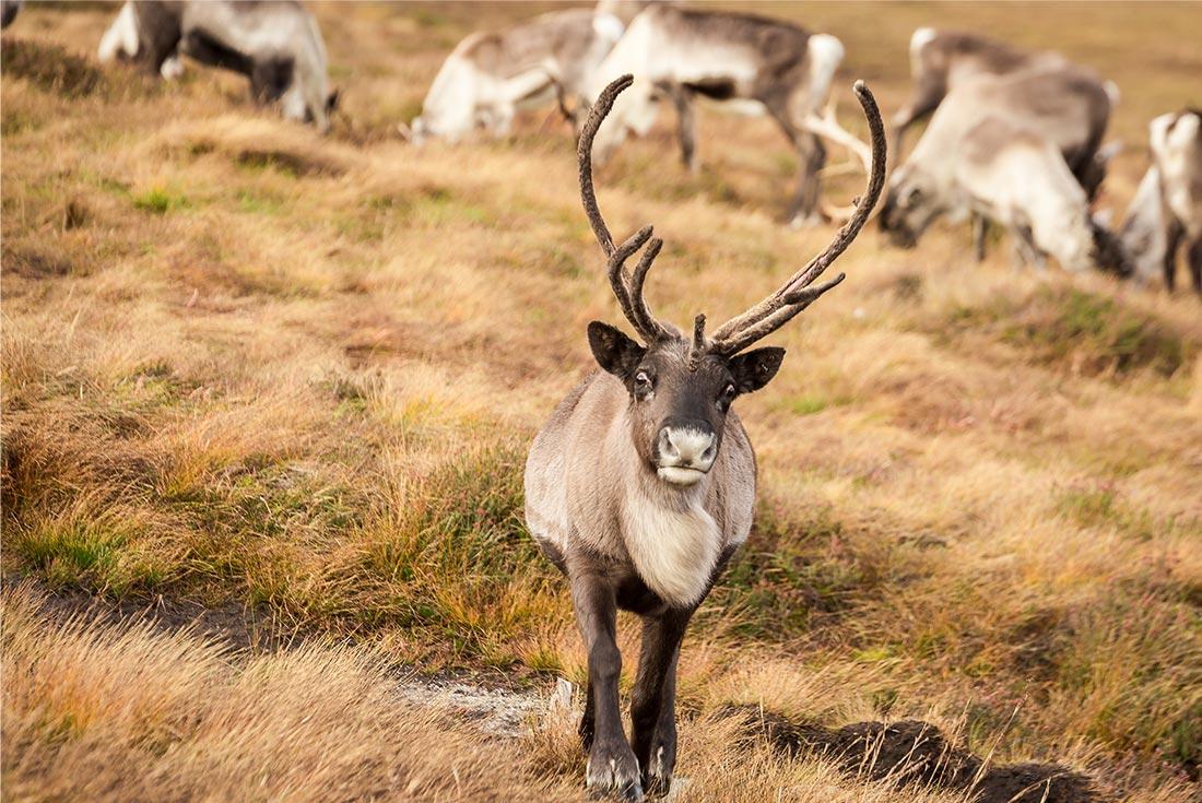 Scotland: Cairngorms Winter Walking 2