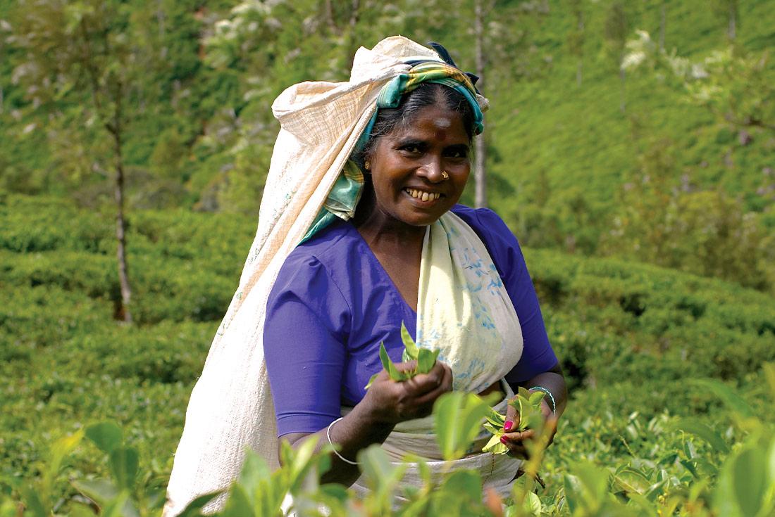 Premium Sri Lanka 3