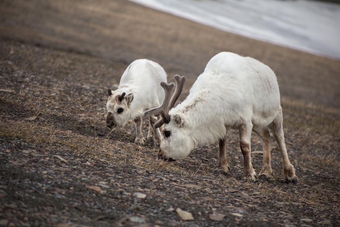Spitsbergen Photography Adventure 3