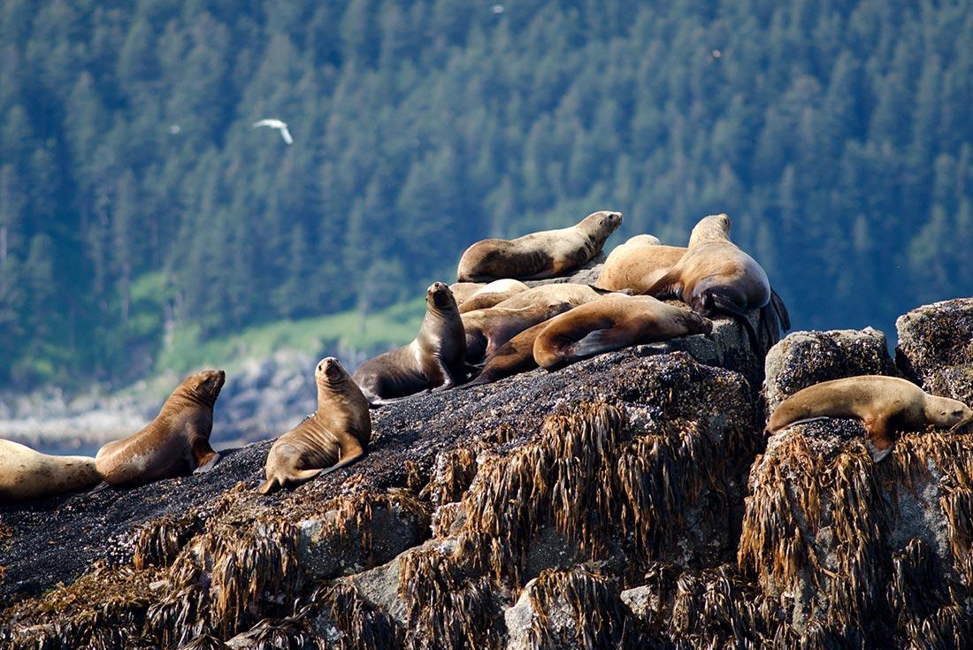 Alaska Summer Family Holiday 3