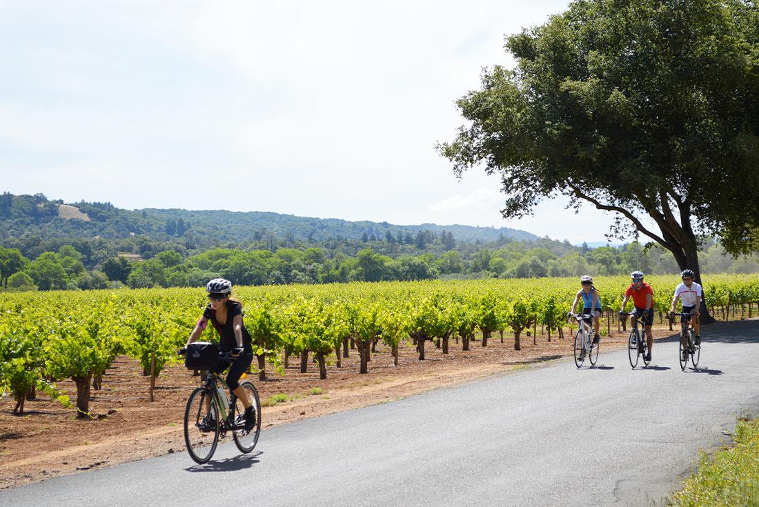 Cycle Sonoma & the Napa Valley 3