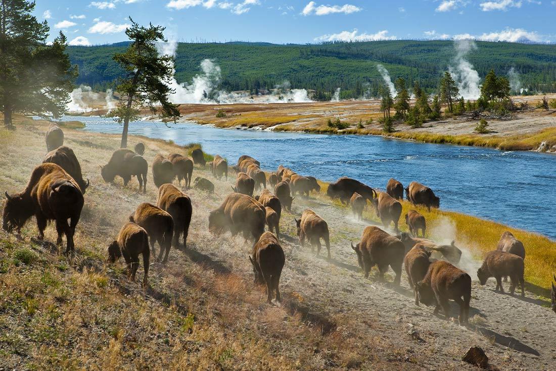 Yellowstone and Grand Teton Adventure 2