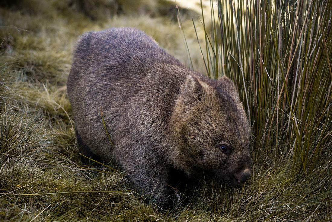 Tasmania Tarkine & Cradle Mountain Explorer 3