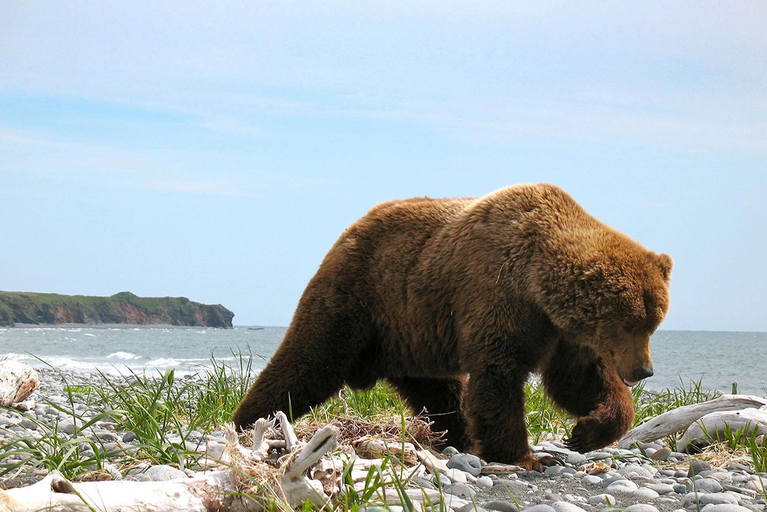 Walk Alaska's Kenai Peninsula 4