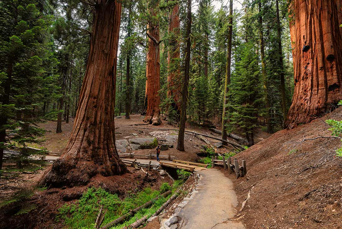 Walk Yosemite National Park 2
