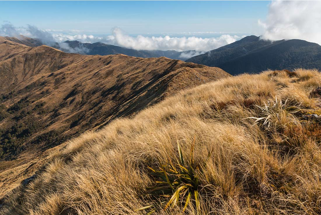 Cycle New Zealand: Wilderness Trail 4