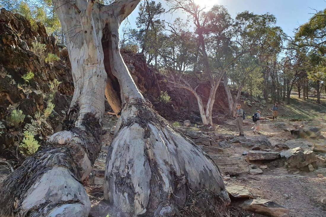 Walk the Flinders Ranges 2