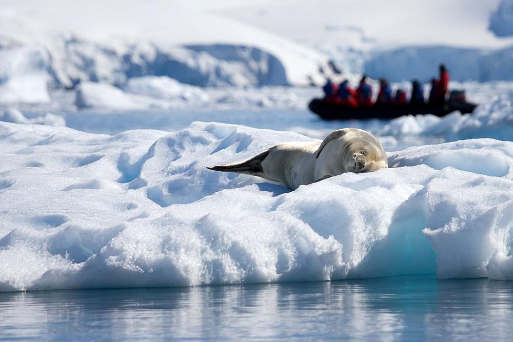 Antarctic Explorer (Island Sky) 2017 - 2018 1