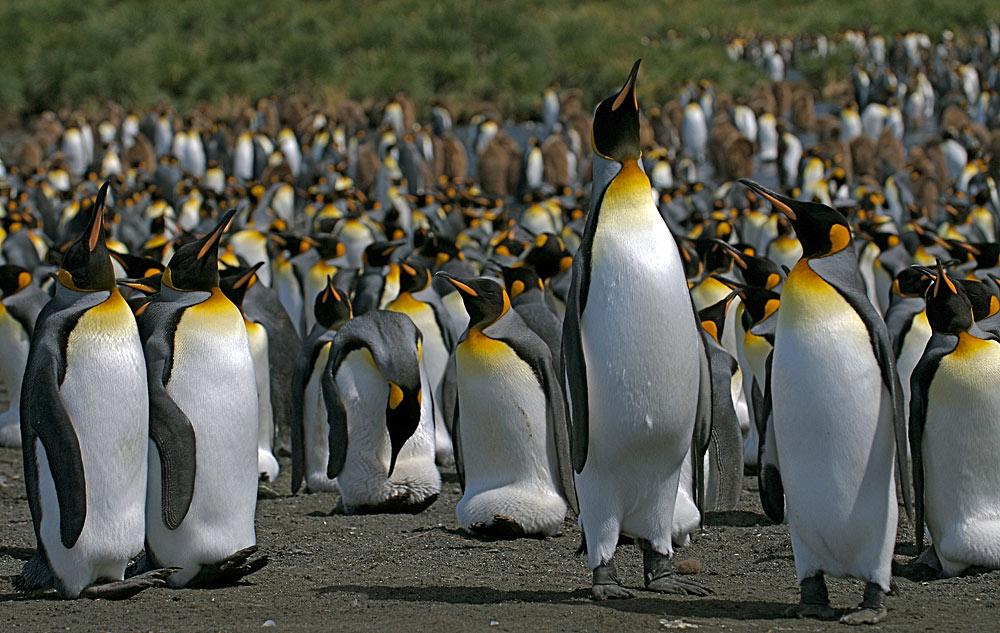 Crossing the Circle via Falklands & South Georgia 1