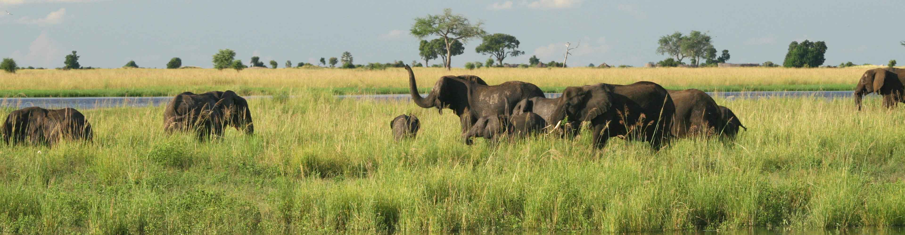 Chobe Experience – Independent
