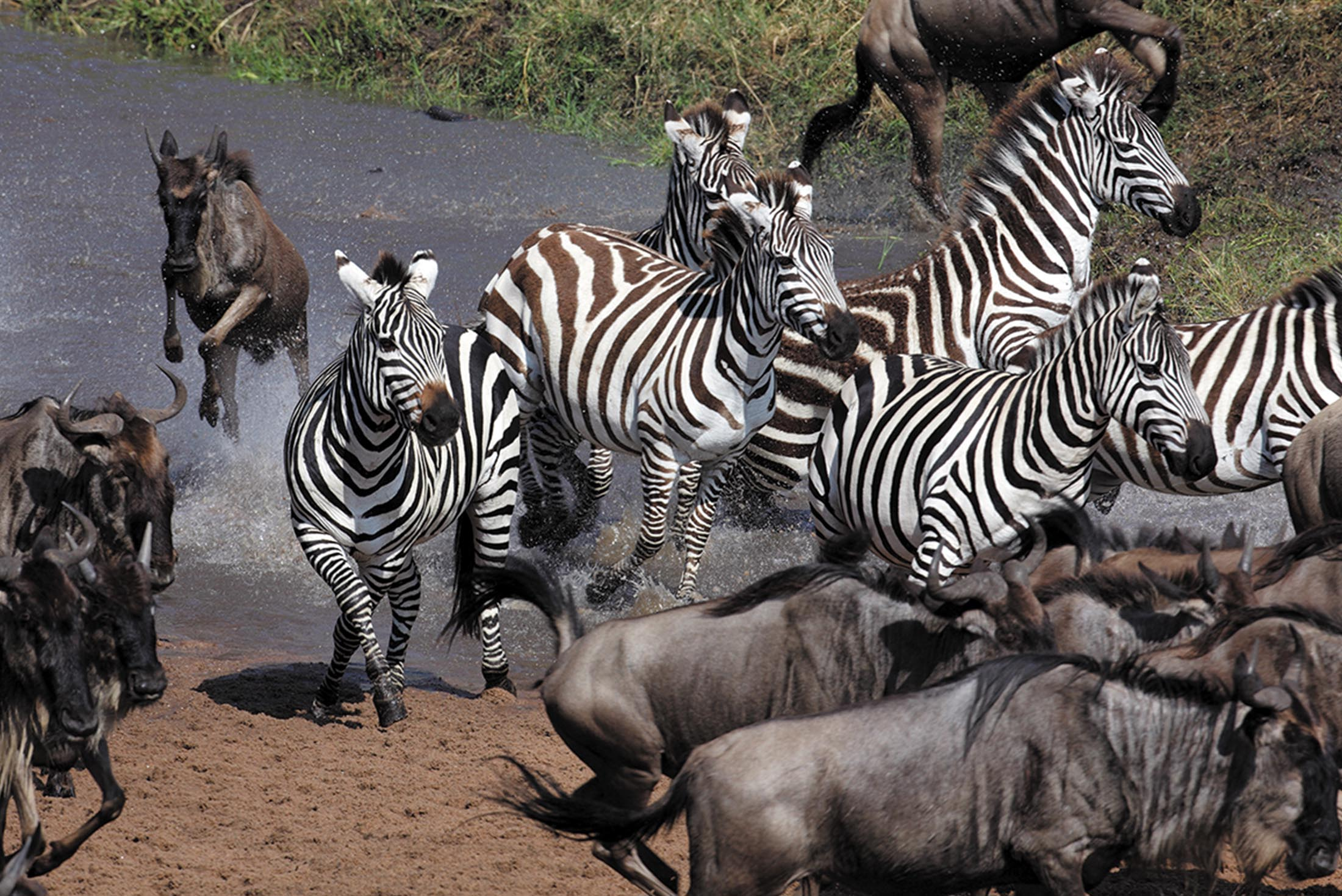 East Africa Migration Safari: Limited Edition 2