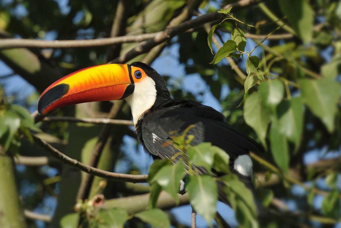 Amazing Costa Rica 2