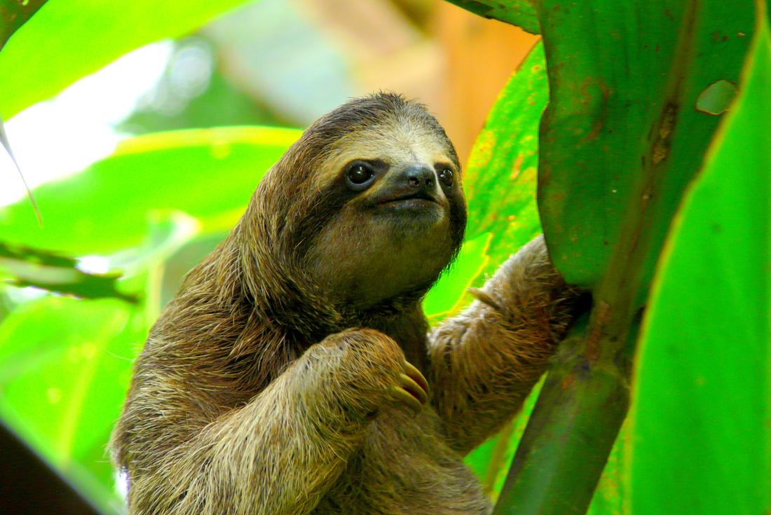 Amazing Costa Rica 3