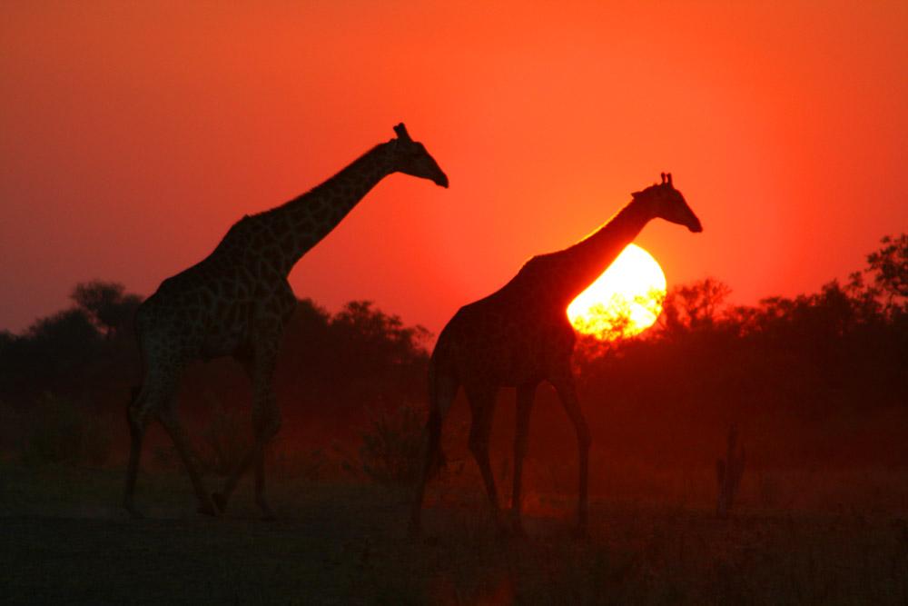 Grand Africa - Nairobi to Port Elizabeth 1