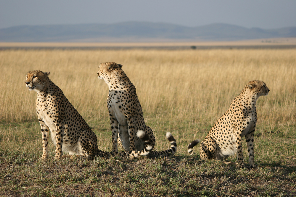 Grand Africa - Nairobi to Port Elizabeth 3