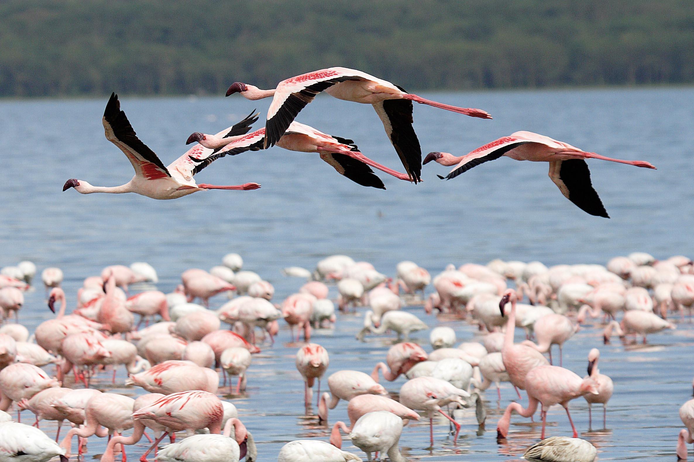 Grand Africa - Nairobi to Port Elizabeth 4