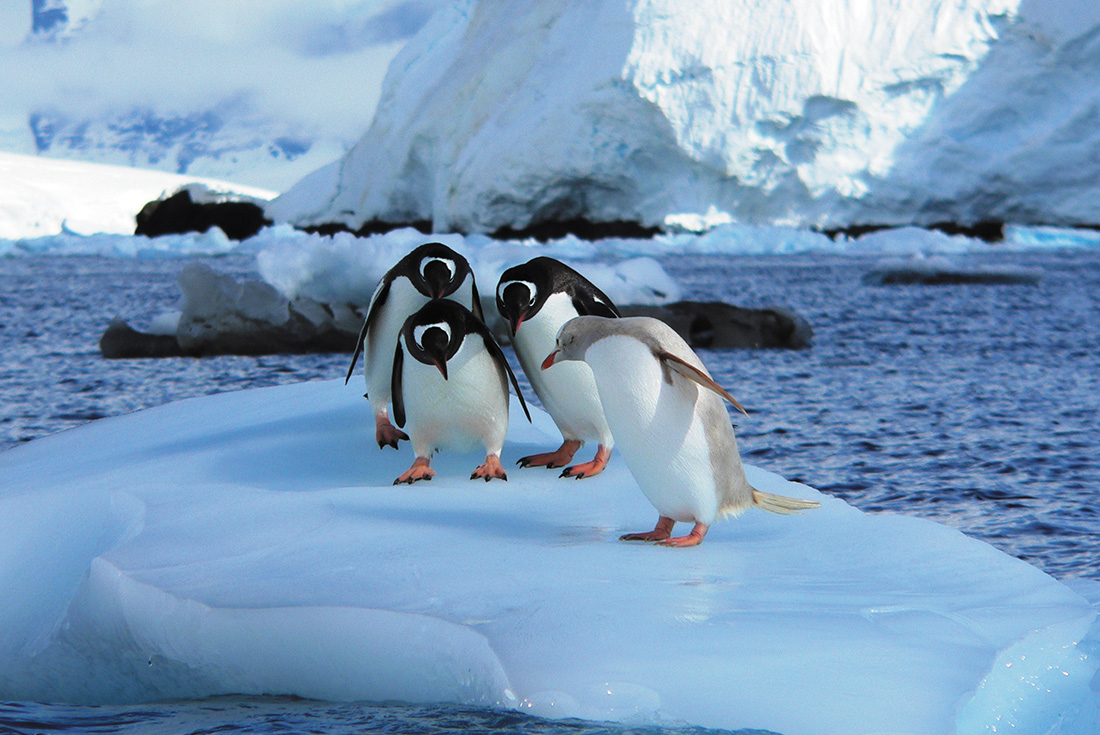 Photography Series:  Crossing the Antarctic Circle 3
