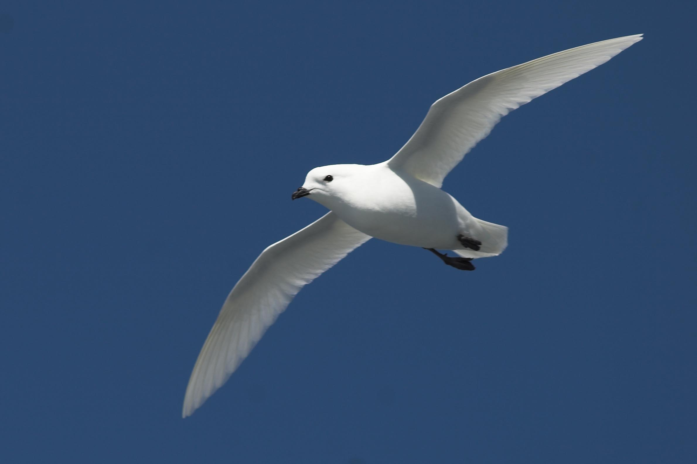Antarctic Express - Fly the Drake from Punta Arenas 2