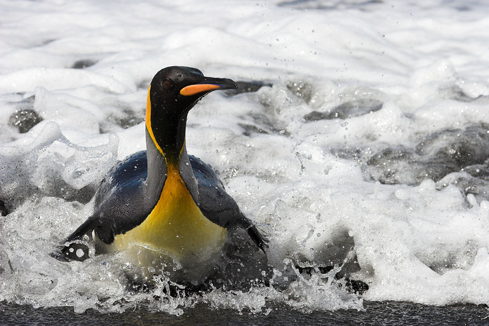 Antarctic Peninsula, Falkland Islands & South Georgia from Ushuaia 1