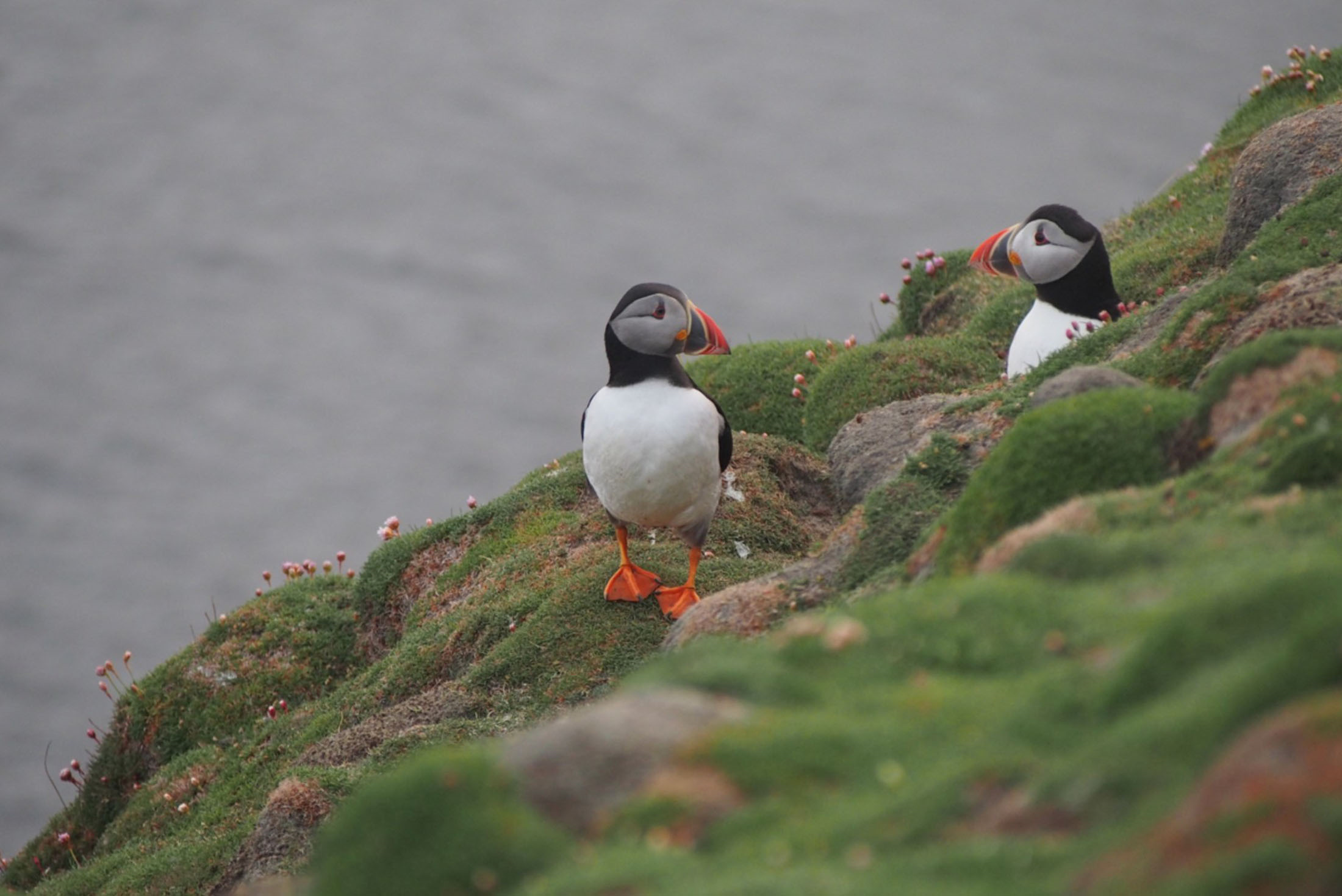 Fair Isle, Faroes and Spitsbergen 1