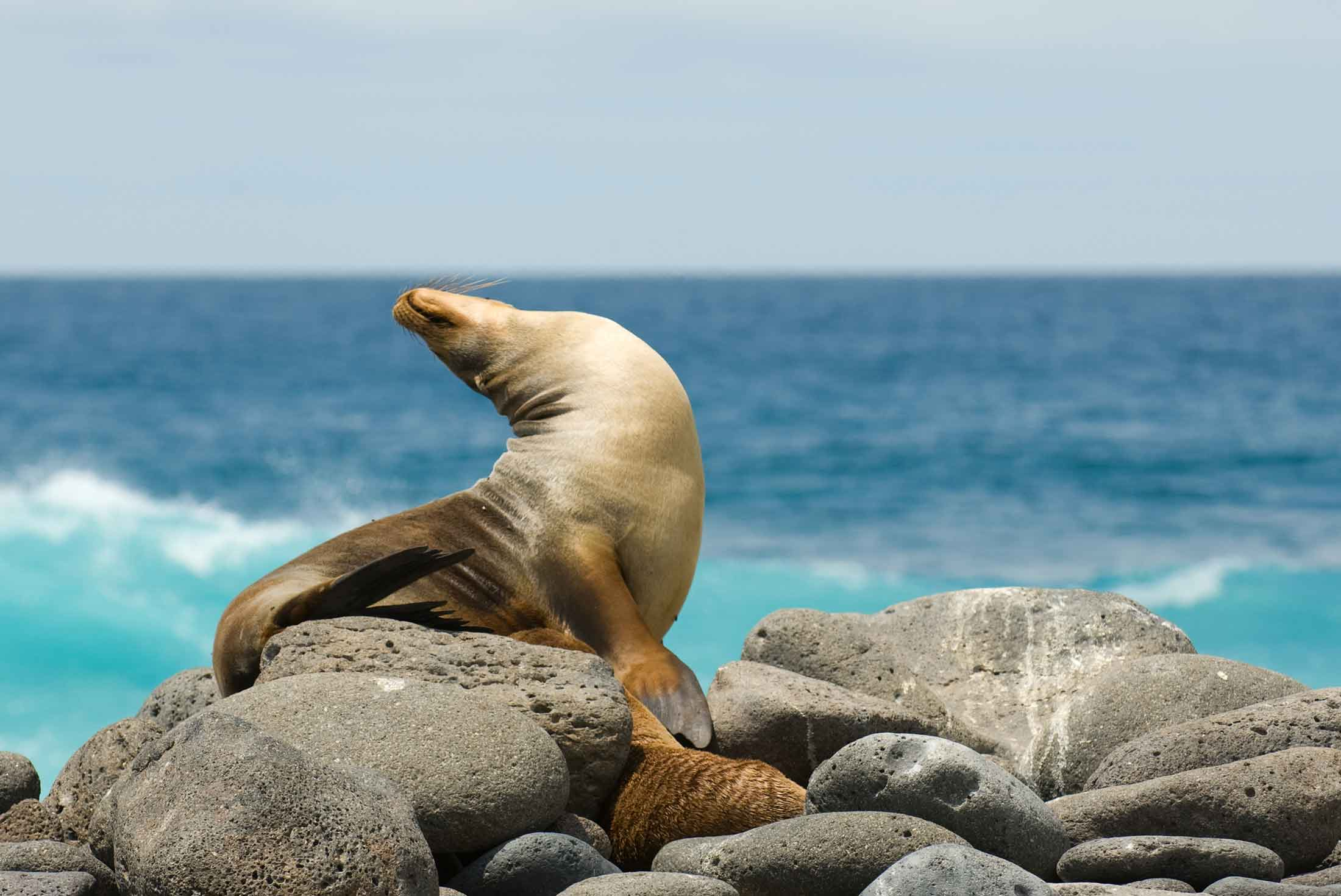 Classic Galapagos - South Eastern Islands (Grand Queen Beatriz) 2