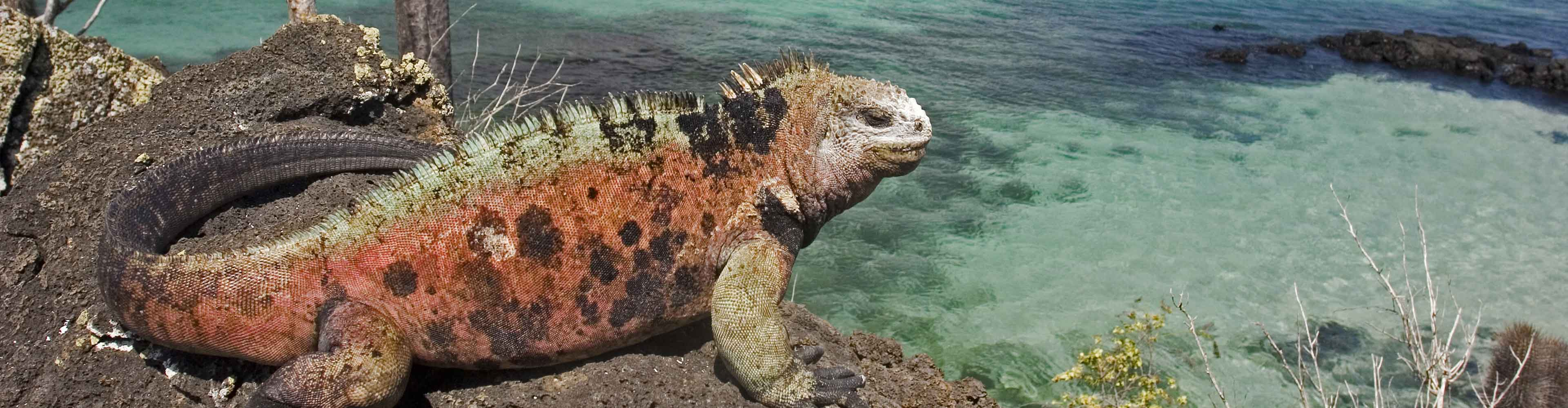 Galapagos Encounter: Southern Islands  (Grand Queen Beatriz)