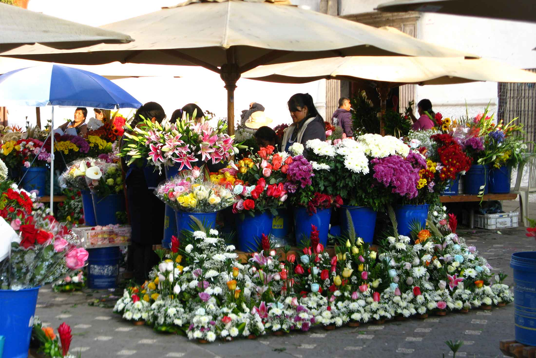 Colombia & the Medellin Flower Festival - Limited Edition 3