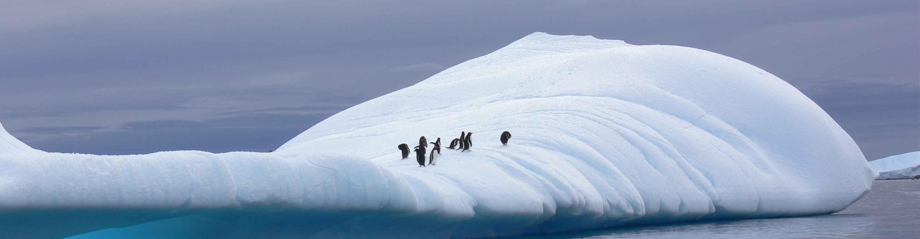 Discover Antarctica