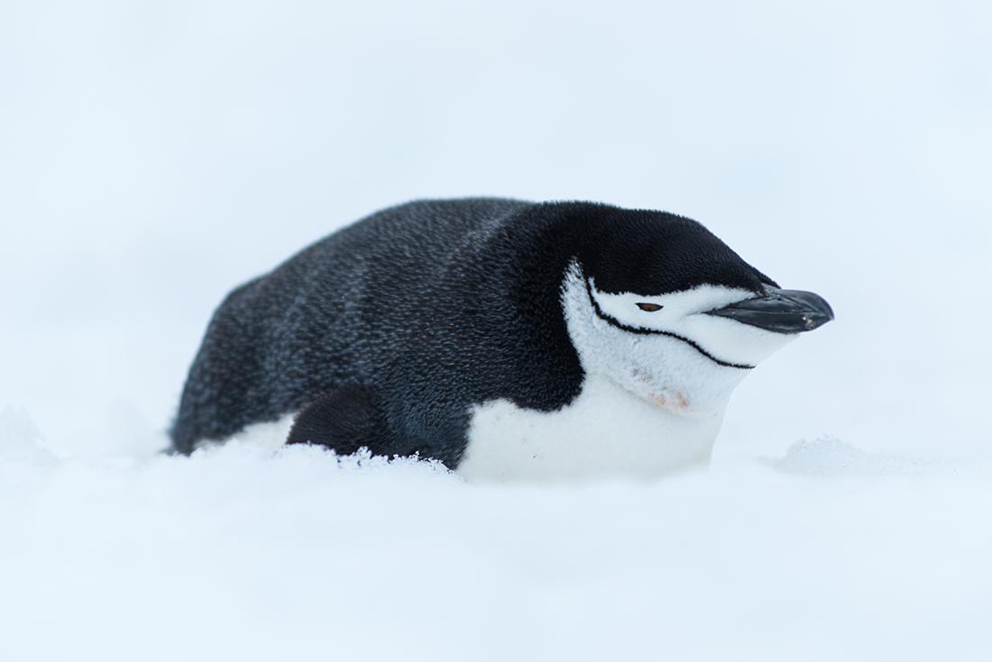 Pristine Antarctica 11 days from Ushuaia 3