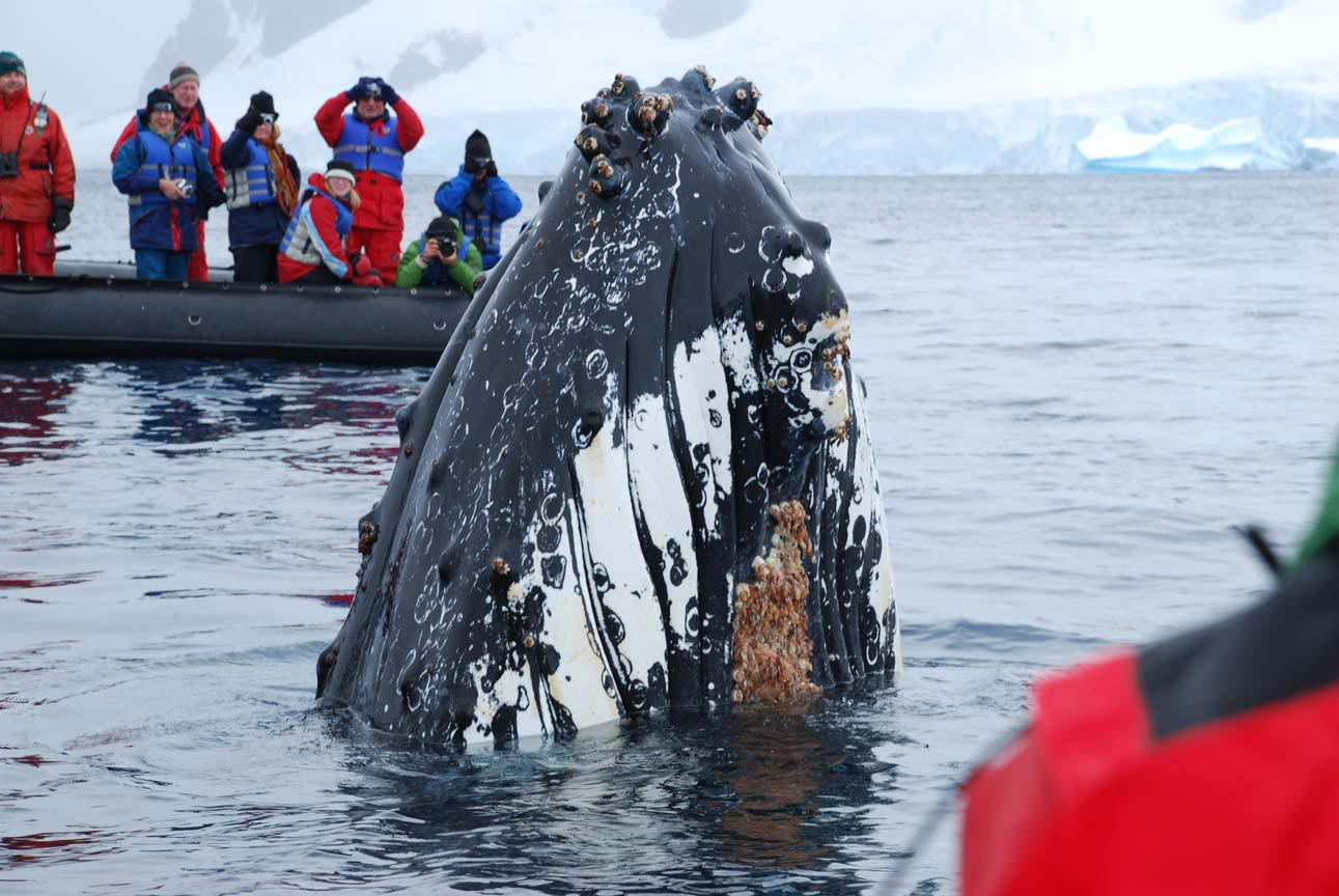 Discover Antarctica 11 days from Ushuaia 1