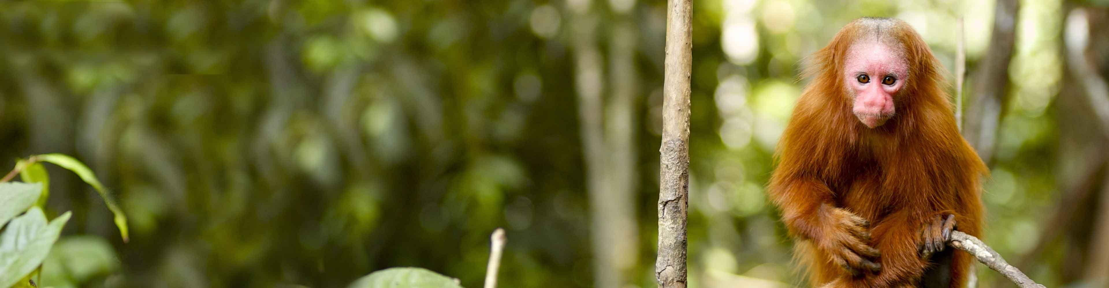 Peru Jungle Experience – Independent