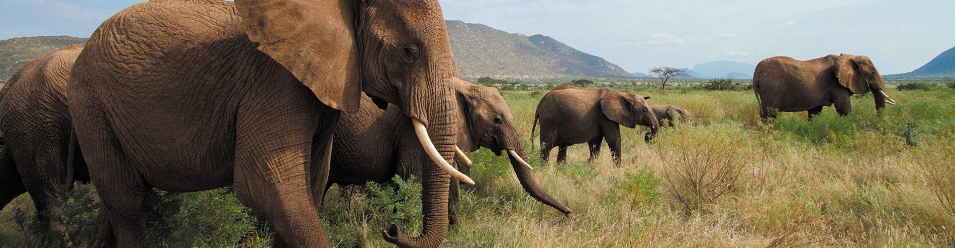 Grand Africa: Nairobi to Port Elizabeth