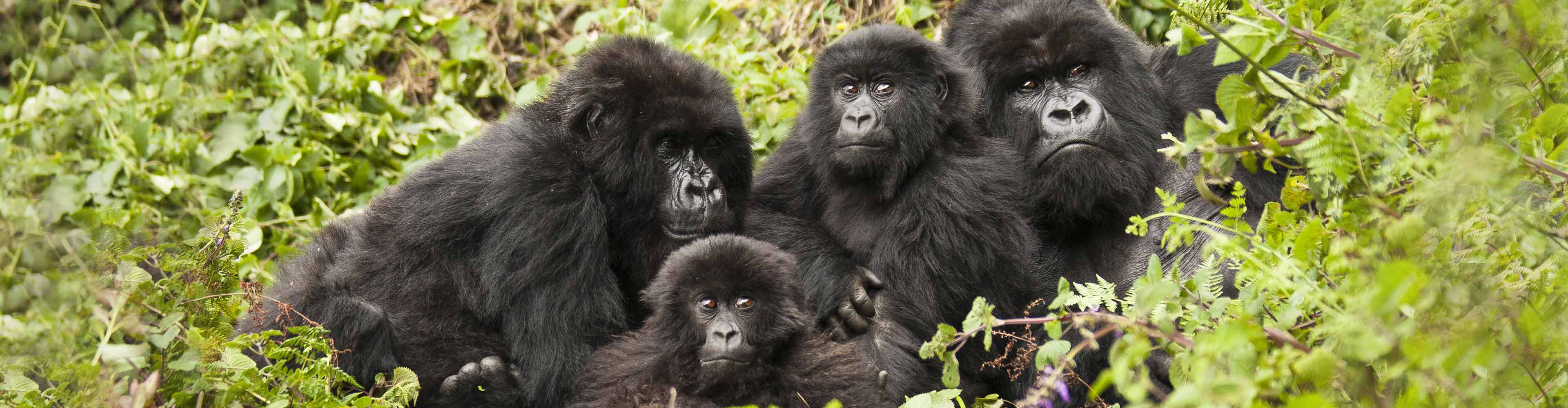 Uganda Gorilla Expedition & Safari – Limited Edition