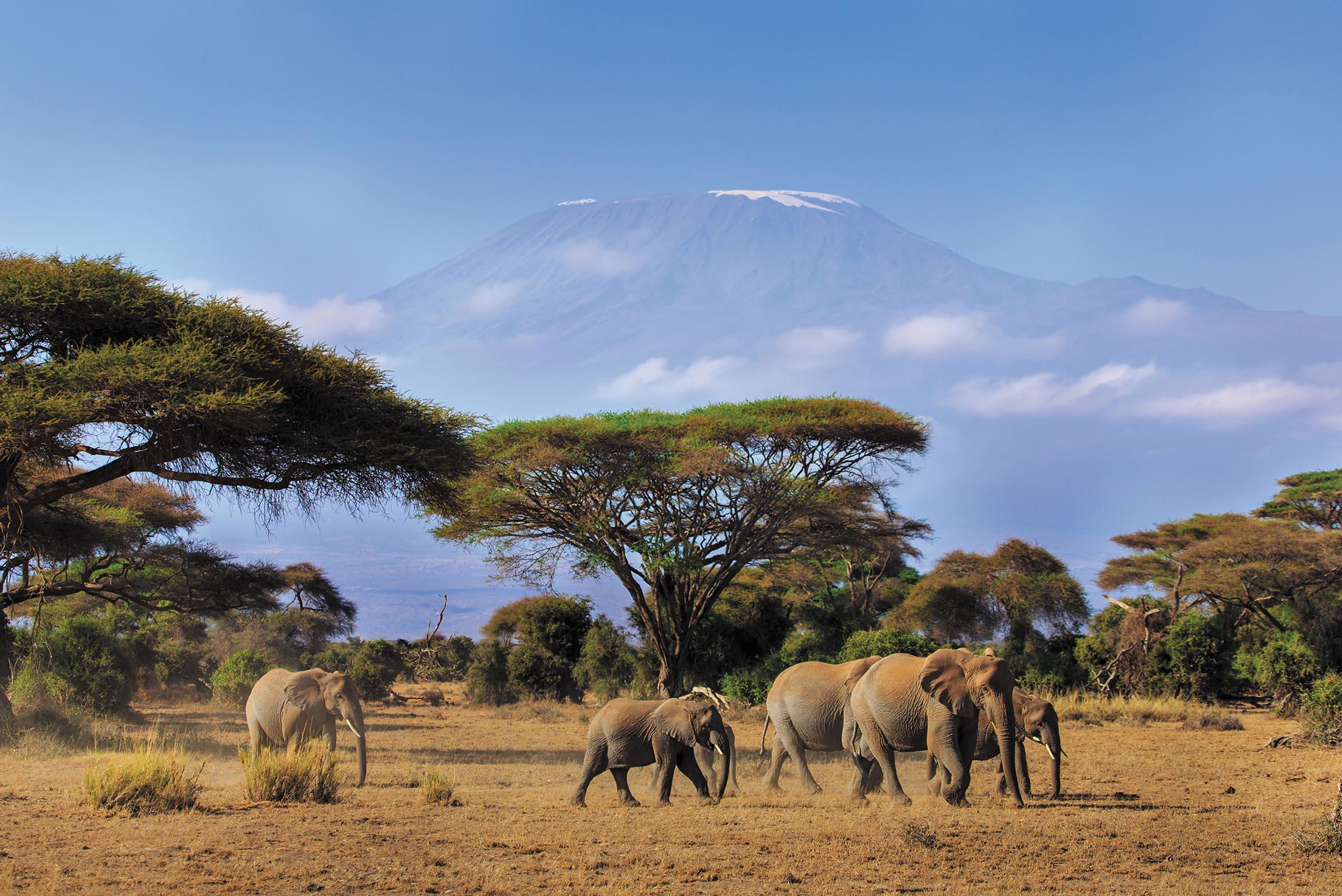 Kenya Safari Experience - Independent 1