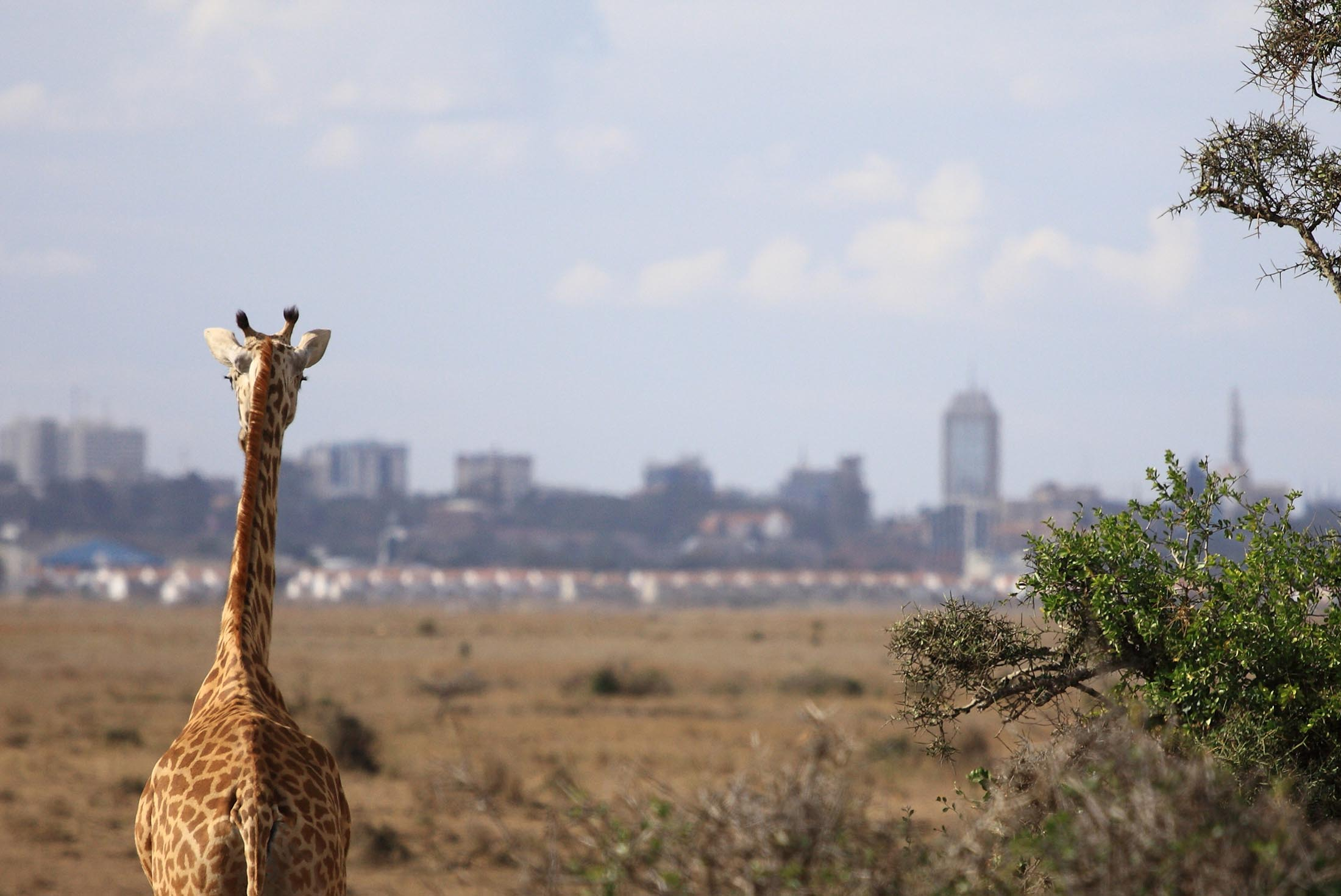 Kenya Safari Experience - Independent 3