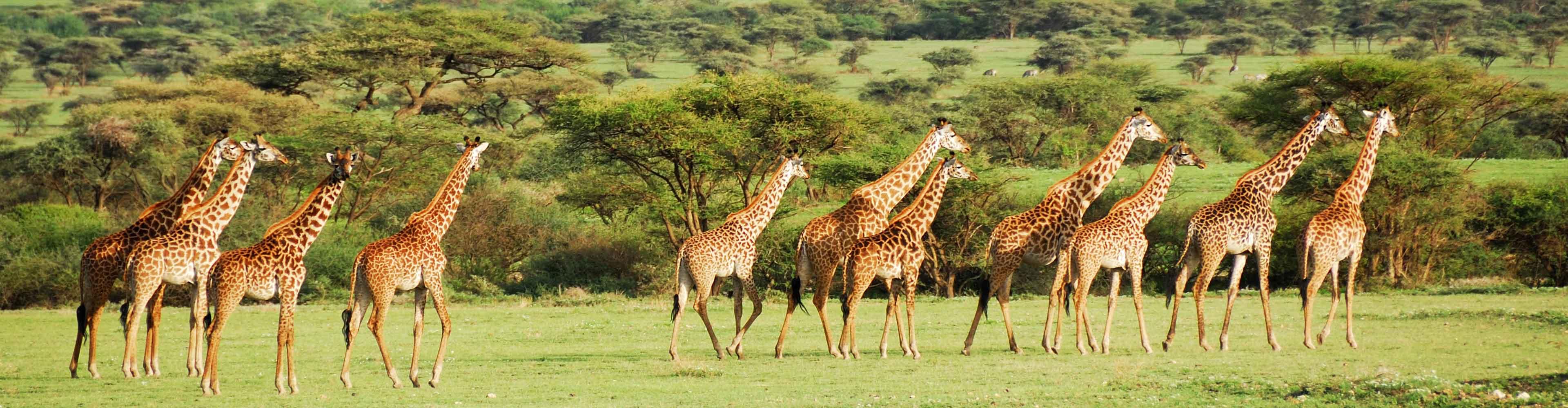Serengeti & Ngorongoro Experience – Independent