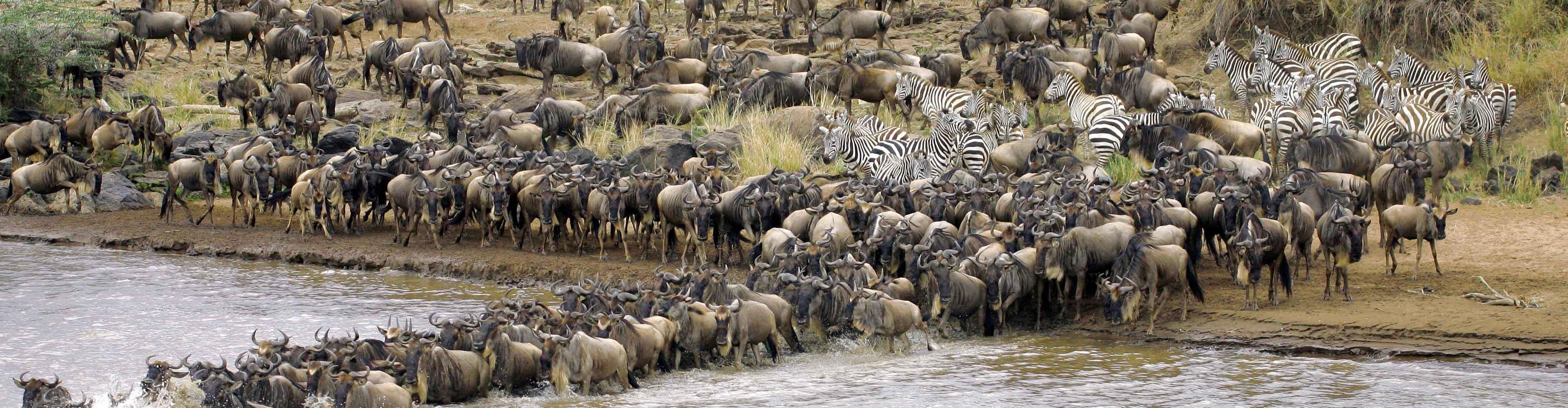 Masai Mara Experience – Independent